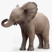 Elephant Baby Rigged 3d model