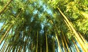 Bamboo Forest Animated HD Pack 3d model