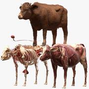 Anatomie de la vache 3d model