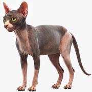 毛猫 3d model
