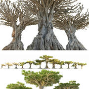 Dragon Tree Mega Pack 3d model