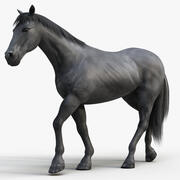 Horse PRO (svart) 3d model