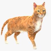 Gele kat (bont) (opgetuigd) 3d model