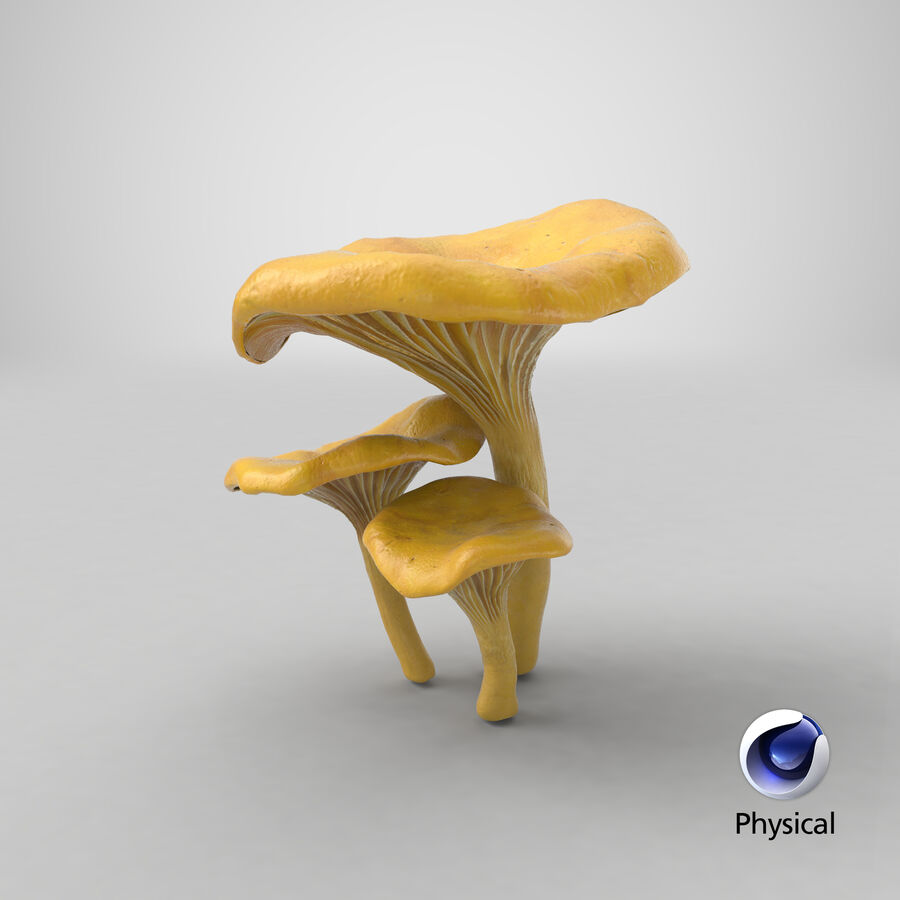 Pfifferlinge Pilze royalty-free 3d model - Preview no. 22