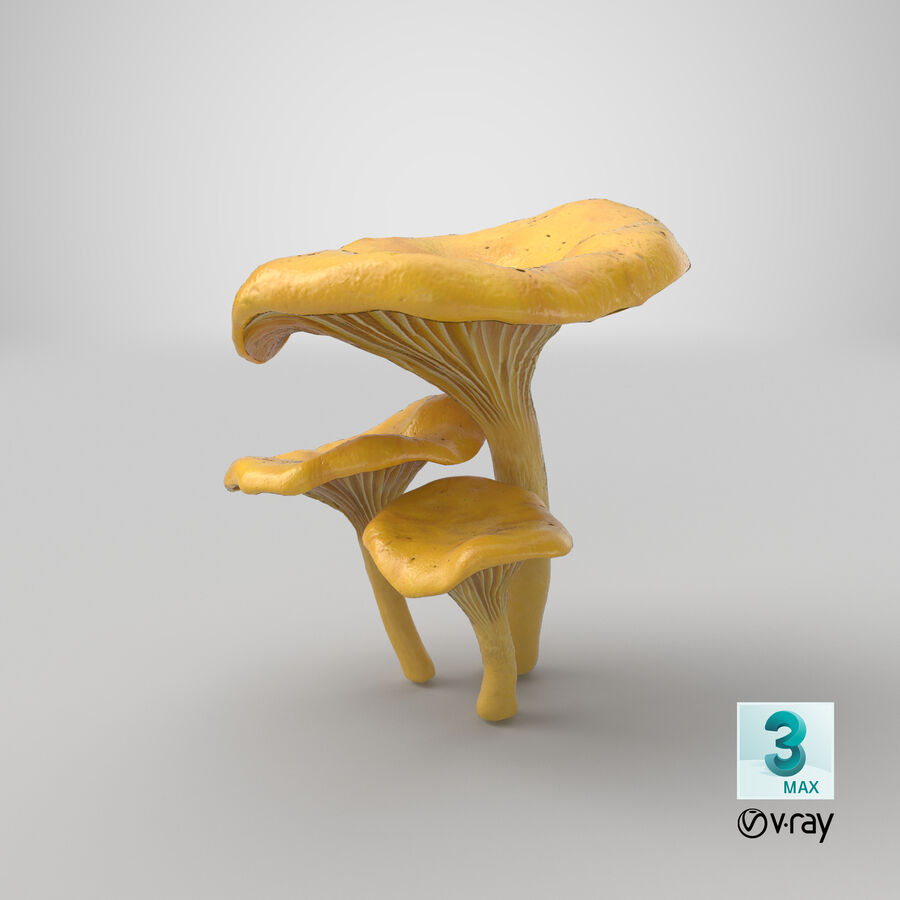 Pfifferlinge Pilze royalty-free 3d model - Preview no. 18