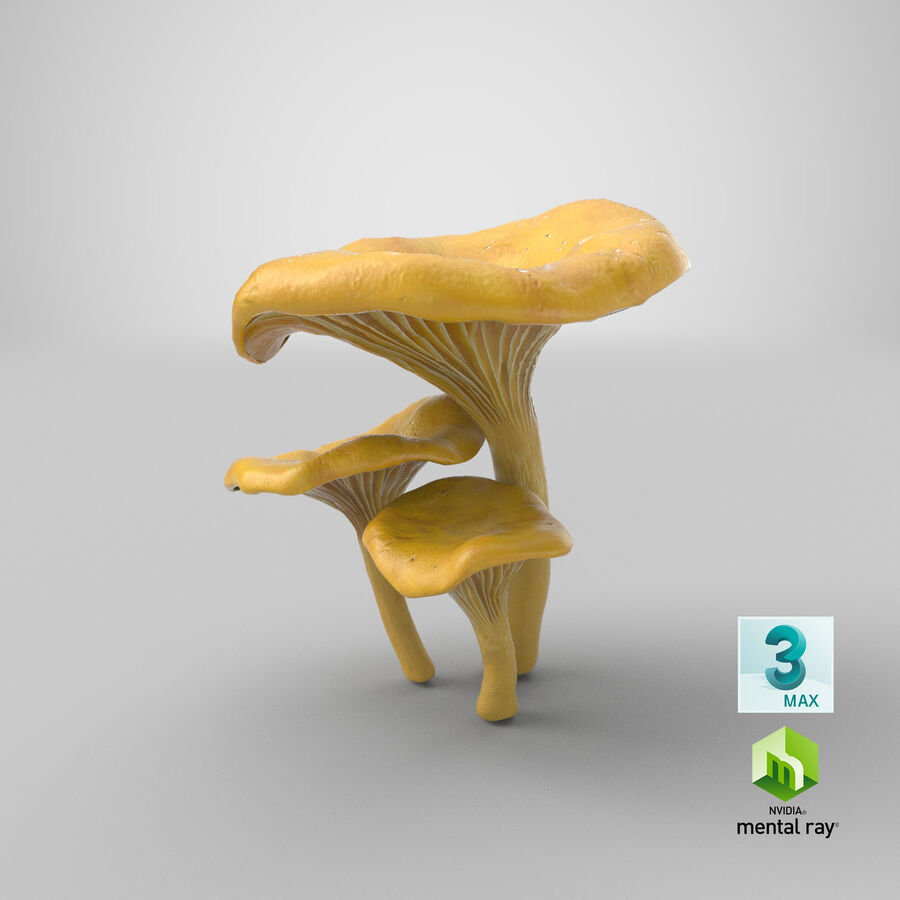 Pfifferlinge Pilze royalty-free 3d model - Preview no. 19