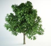 red oak tree 3d model