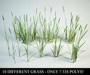 Phleum grass set 3d model