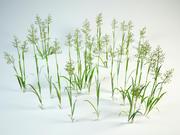 grass set Festuca pratensis 3d model