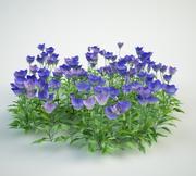 tussock bellflower 3d model