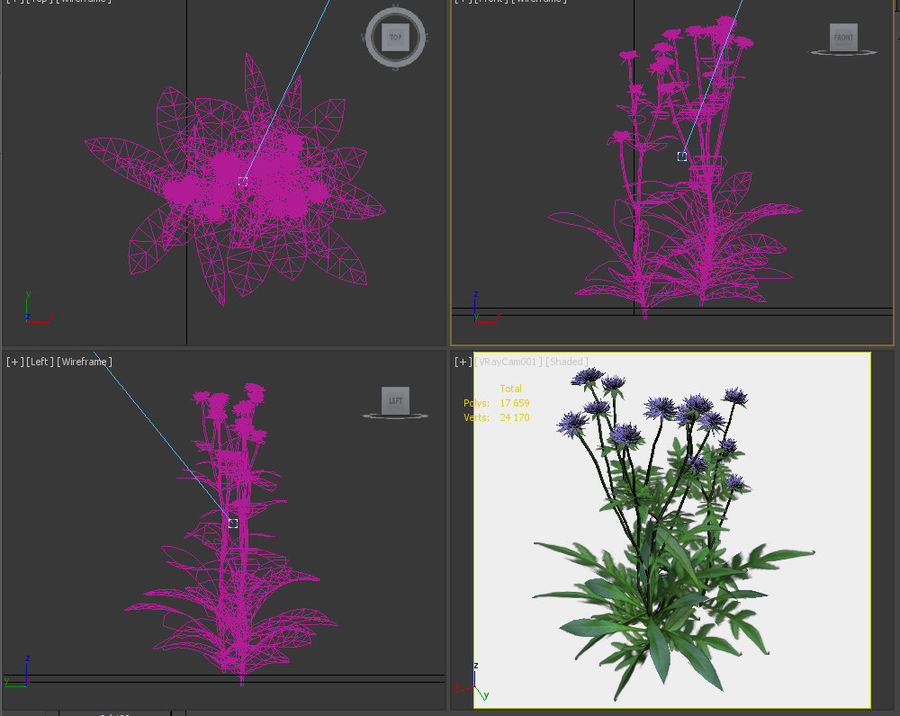 field scabious royalty-free 3d model - Preview no. 8