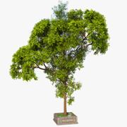 Długie drzewo 3d model