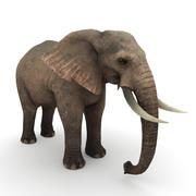 Африканский слон 3d model