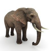 Elefante africano 3d model