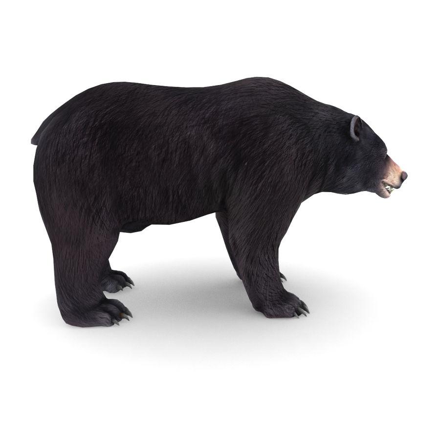 Urso preto royalty-free 3d model - Preview no. 2