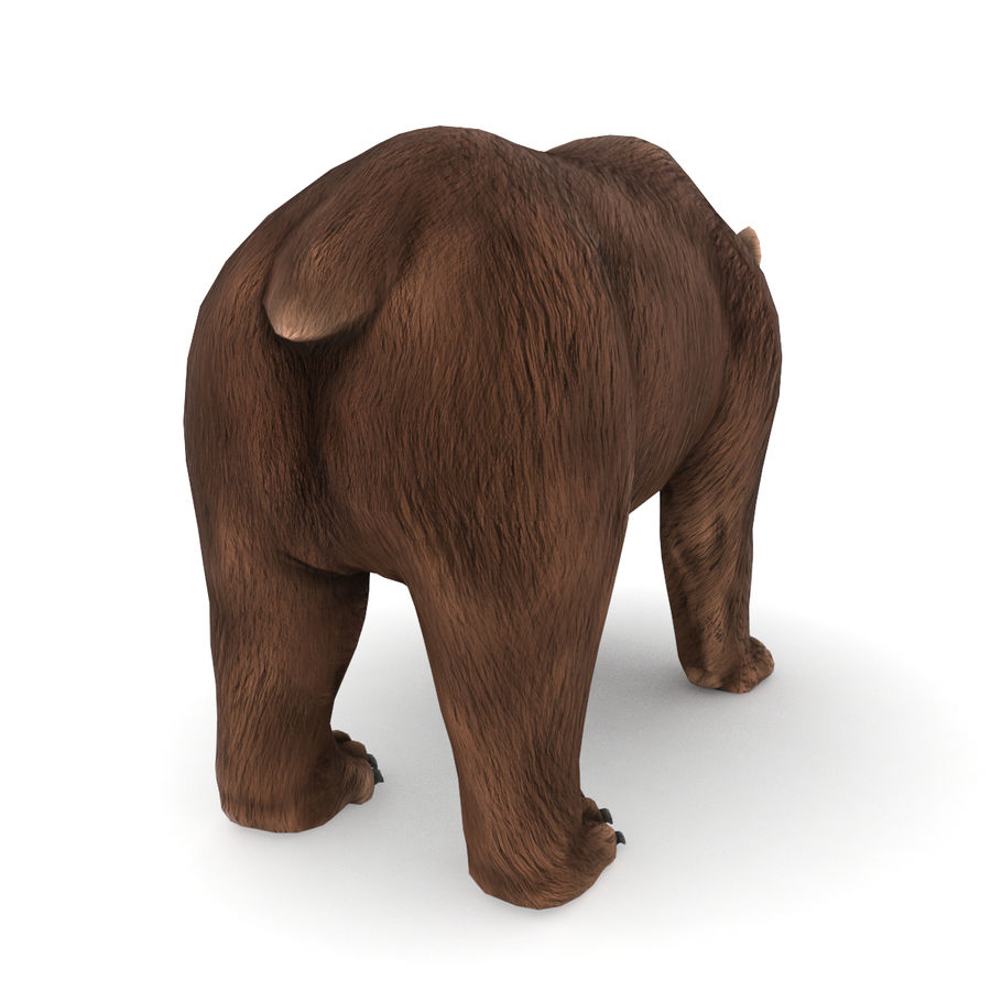 Urso marrom royalty-free 3d model - Preview no. 3