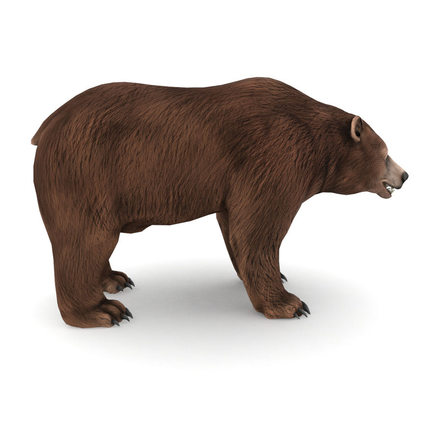 Urso marrom royalty-free 3d model - Preview no. 2