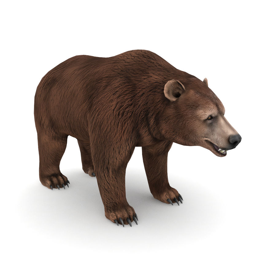 Urso marrom royalty-free 3d model - Preview no. 1