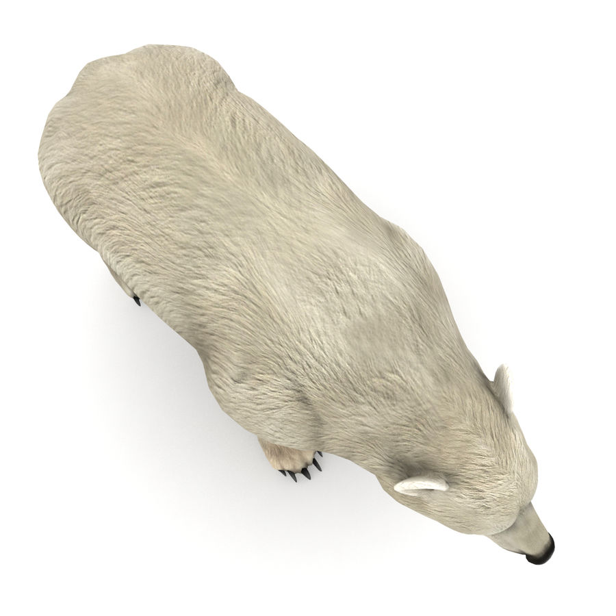 Urso polar royalty-free 3d model - Preview no. 4