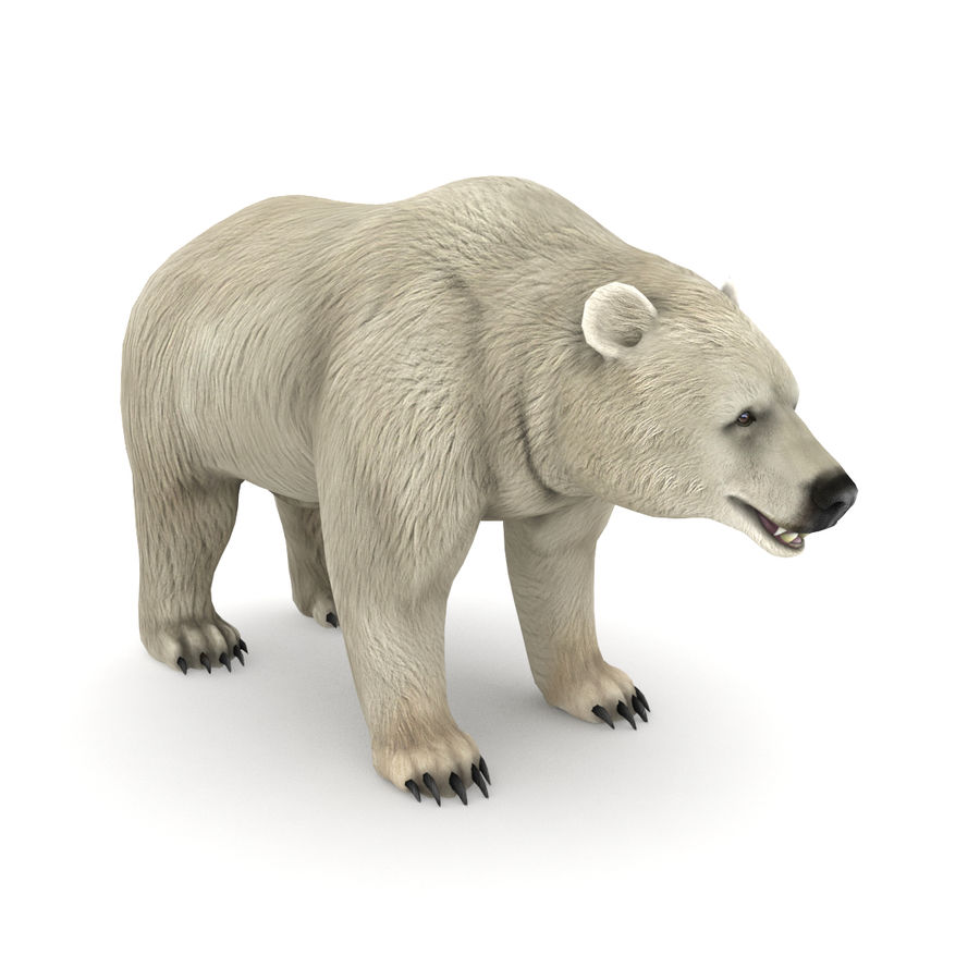 Urso polar royalty-free 3d model - Preview no. 1