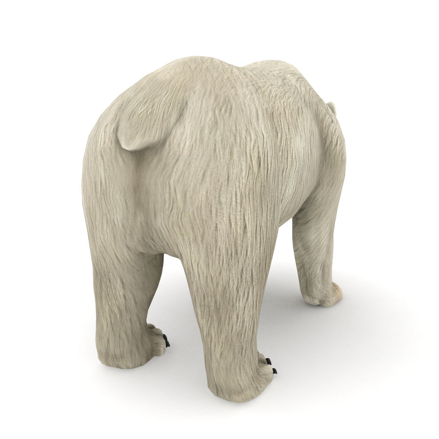 Urso polar royalty-free 3d model - Preview no. 3