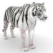 白色的老虎 3d model