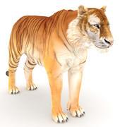 Golden Tiger 3d model