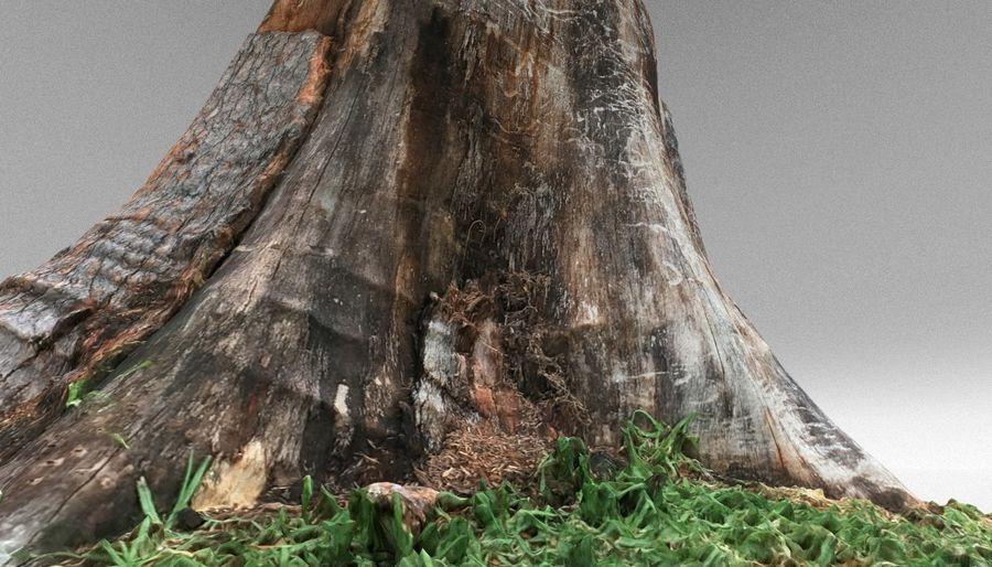 Ağaç kütüğü royalty-free 3d model - Preview no. 12