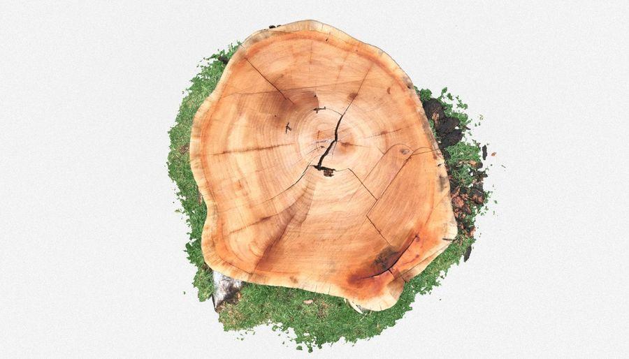 Ağaç kütüğü royalty-free 3d model - Preview no. 5