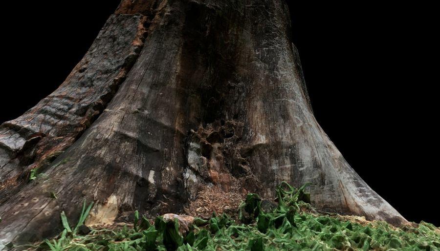 Ağaç kütüğü royalty-free 3d model - Preview no. 13
