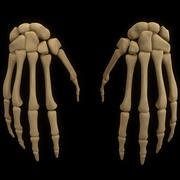 skeletal hand anatomy bone 3d model