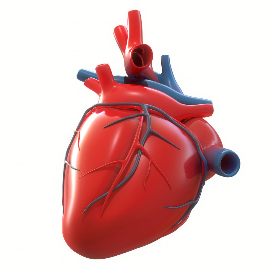 Ludzkie serce royalty-free 3d model - Preview no. 16