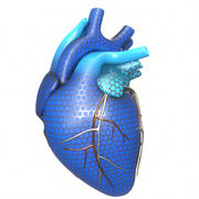 Concept de coeur humain 3d model