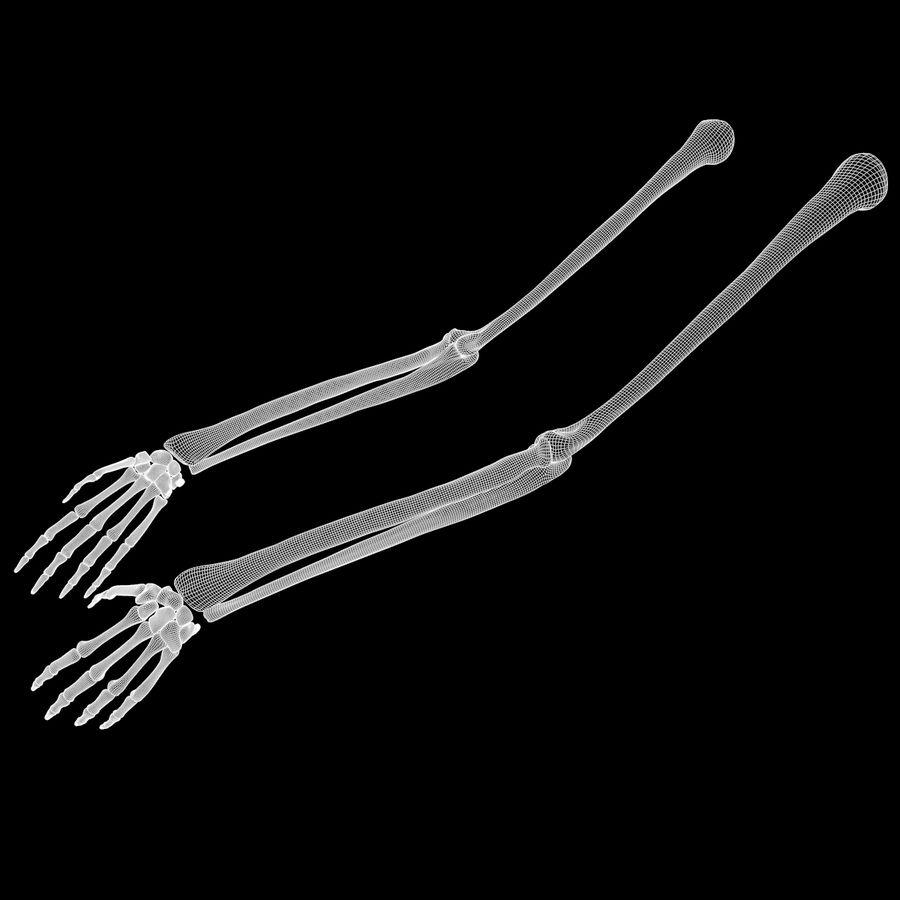 手の腕の骨の解剖学 royalty-free 3d model - Preview no. 8