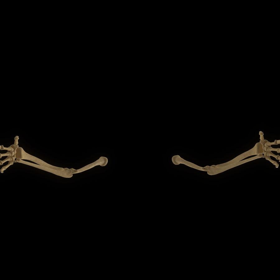 手の腕の骨の解剖学 royalty-free 3d model - Preview no. 4