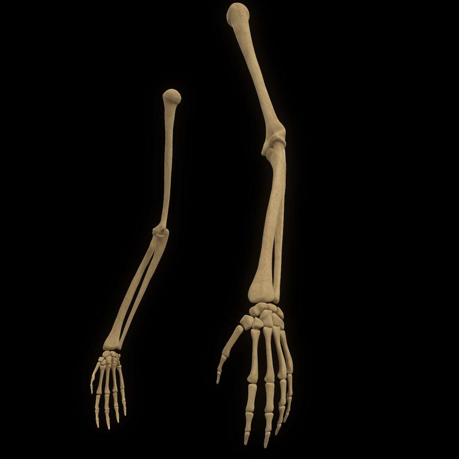 手の腕の骨の解剖学 royalty-free 3d model - Preview no. 3