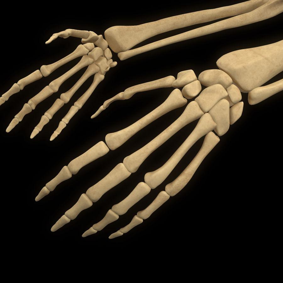 手の腕の骨の解剖学 royalty-free 3d model - Preview no. 7