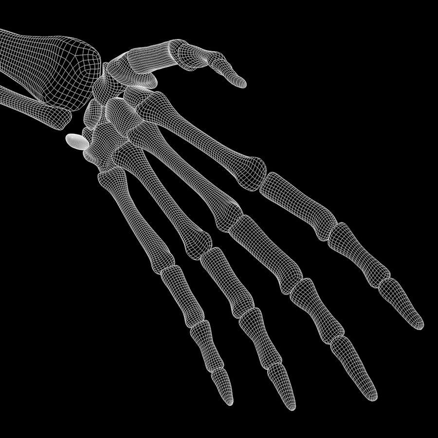 手の腕の骨の解剖学 royalty-free 3d model - Preview no. 10