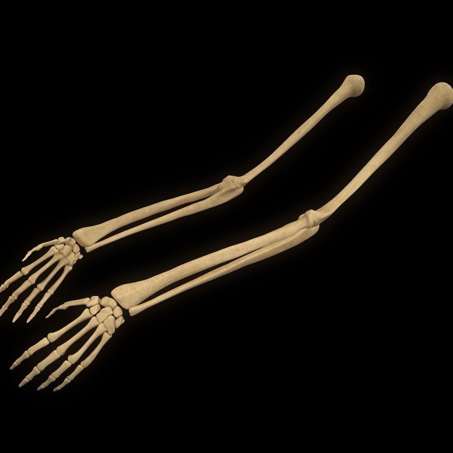 手の腕の骨の解剖学 royalty-free 3d model - Preview no. 1