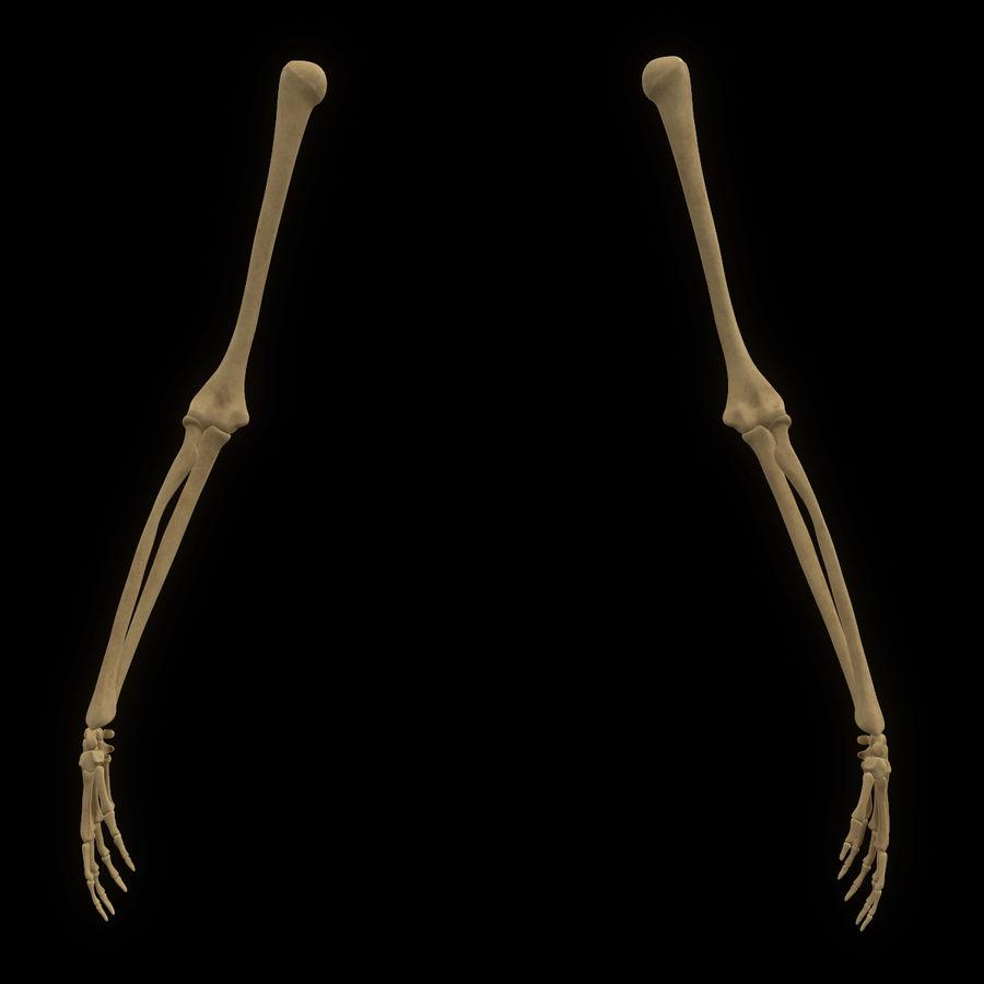 手の腕の骨の解剖学 royalty-free 3d model - Preview no. 2