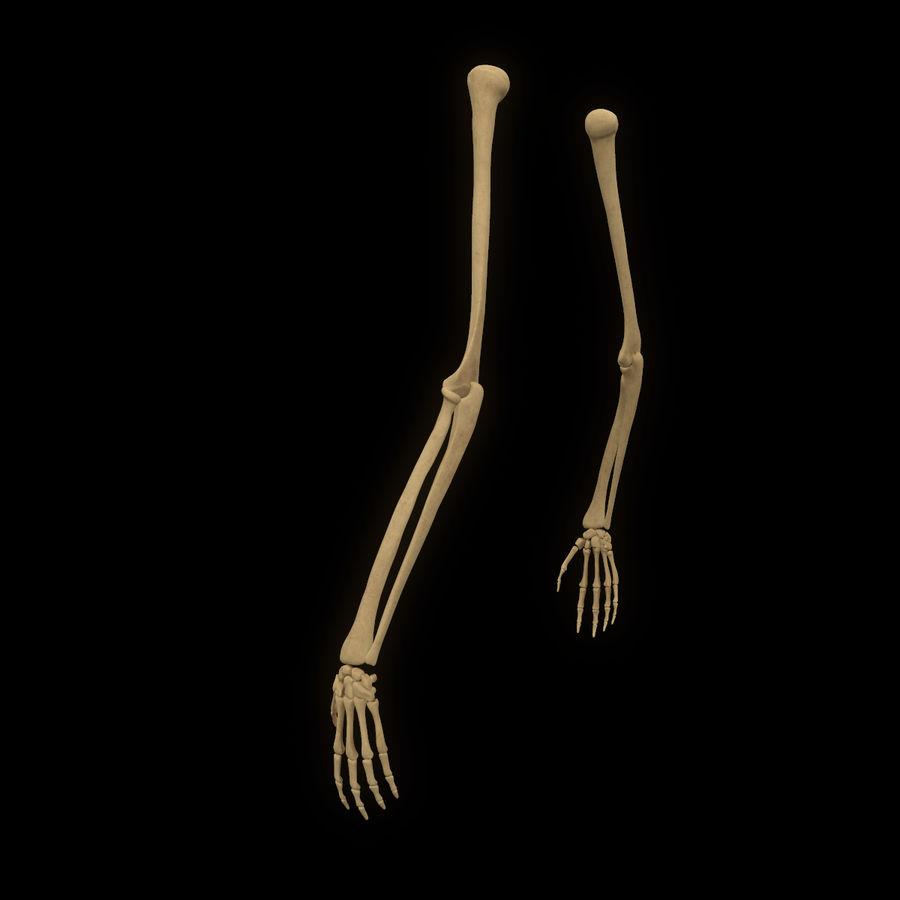 手の腕の骨の解剖学 royalty-free 3d model - Preview no. 6