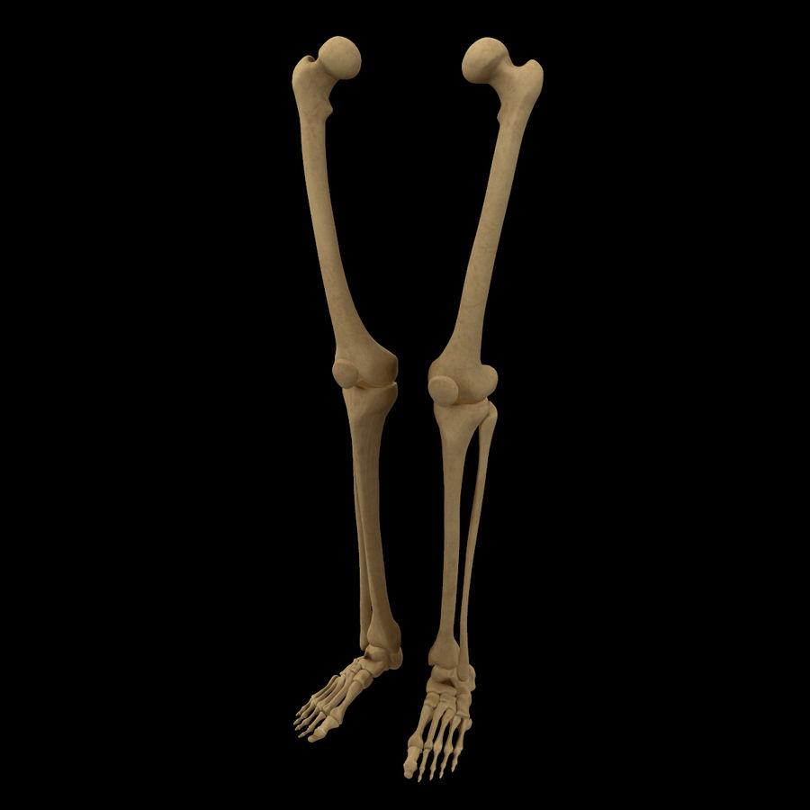 Anatomi Ben Fotben royalty-free 3d model - Preview no. 4
