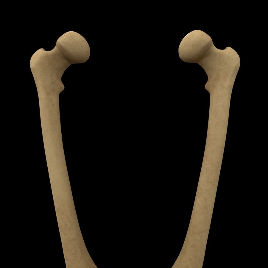 Anatomi Ben Fotben royalty-free 3d model - Preview no. 13