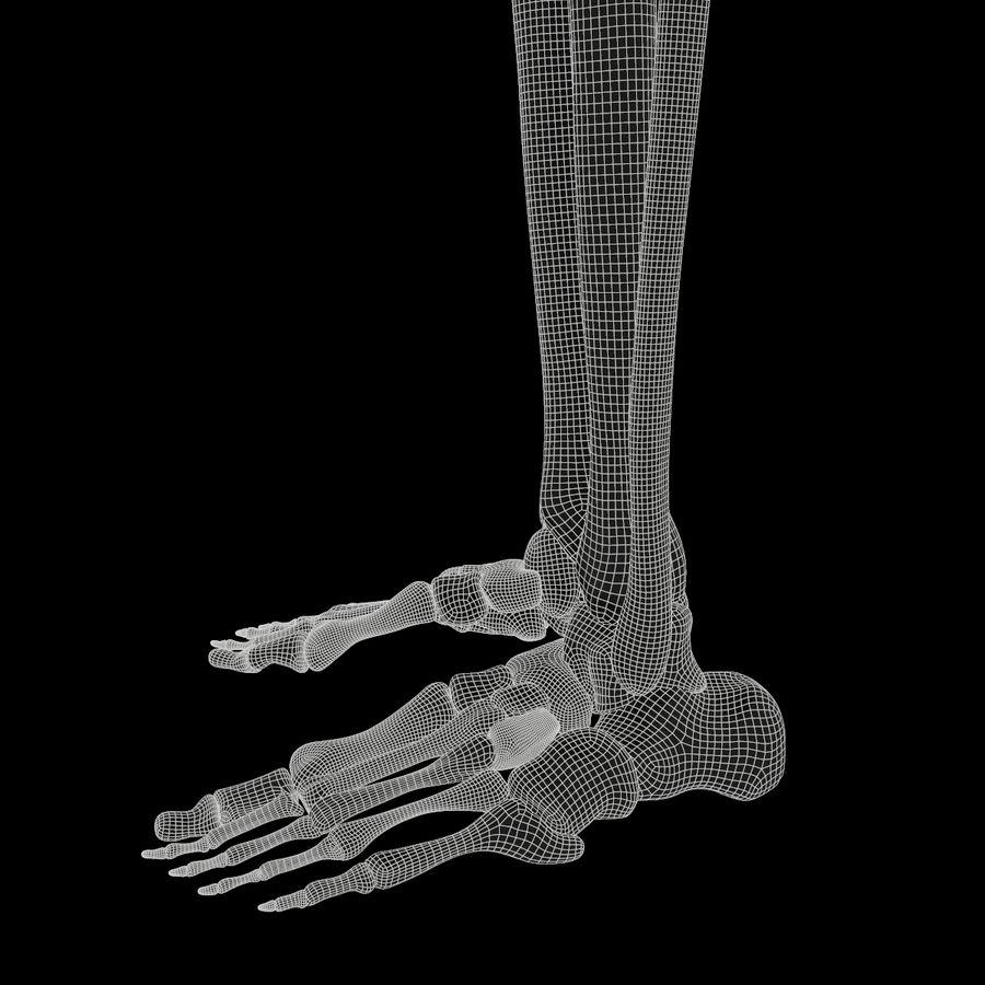 Anatomi Ben Fotben royalty-free 3d model - Preview no. 15
