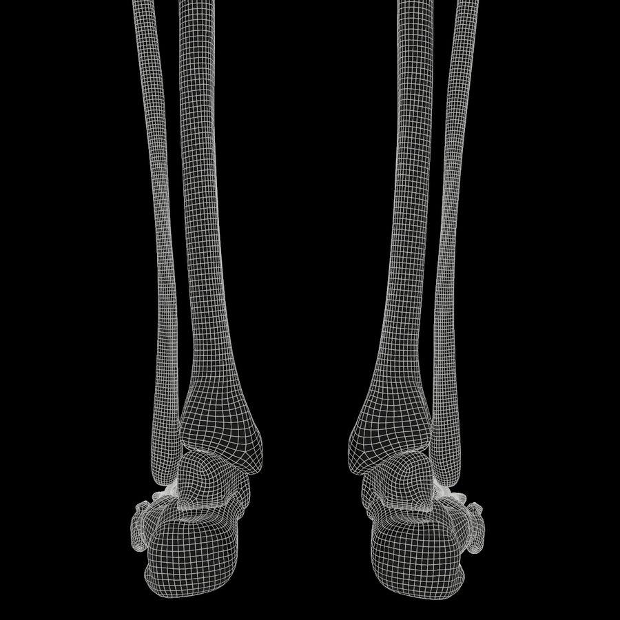 Anatomi Ben Fotben royalty-free 3d model - Preview no. 16