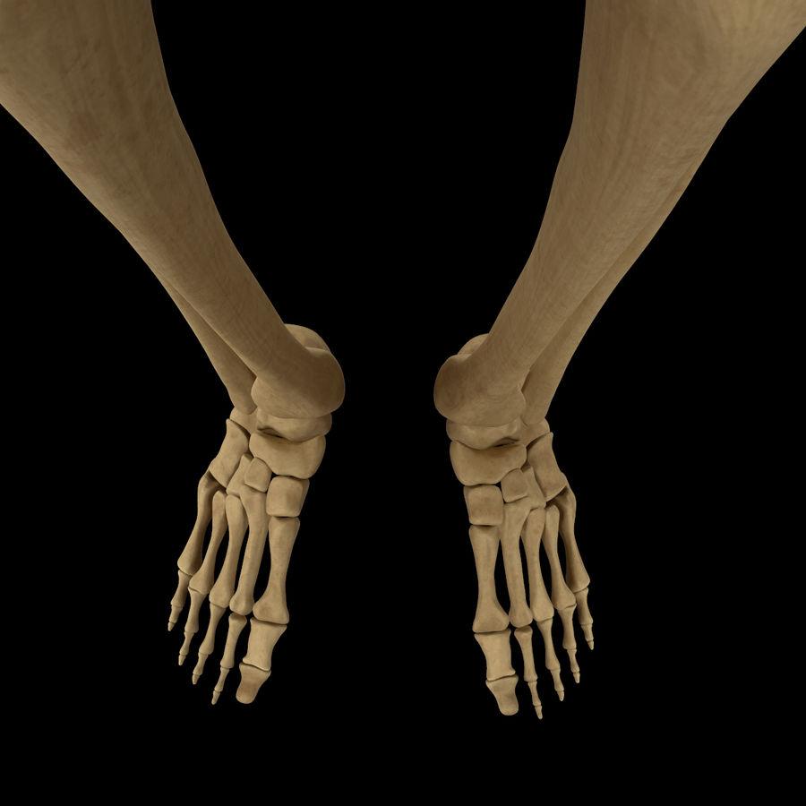 Anatomi Ben Fotben royalty-free 3d model - Preview no. 8