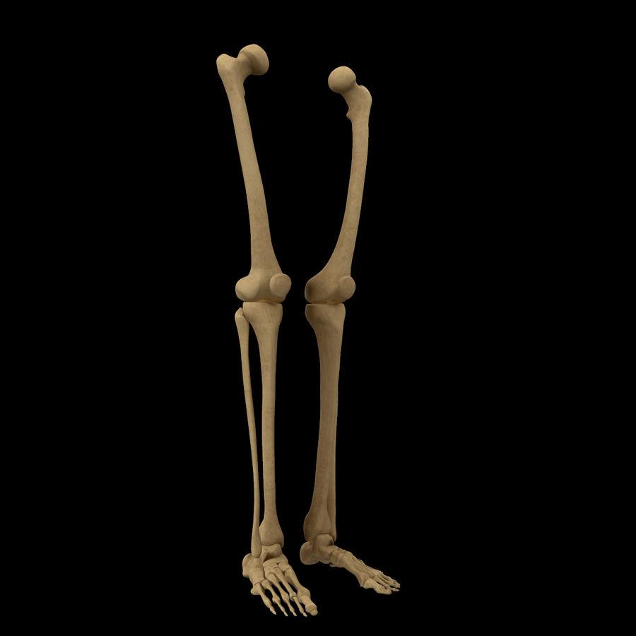 Anatomi Ben Fotben royalty-free 3d model - Preview no. 2