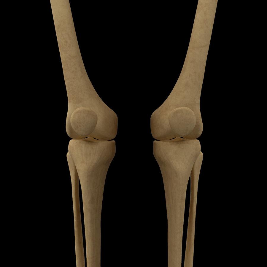 Anatomi Ben Fotben royalty-free 3d model - Preview no. 12