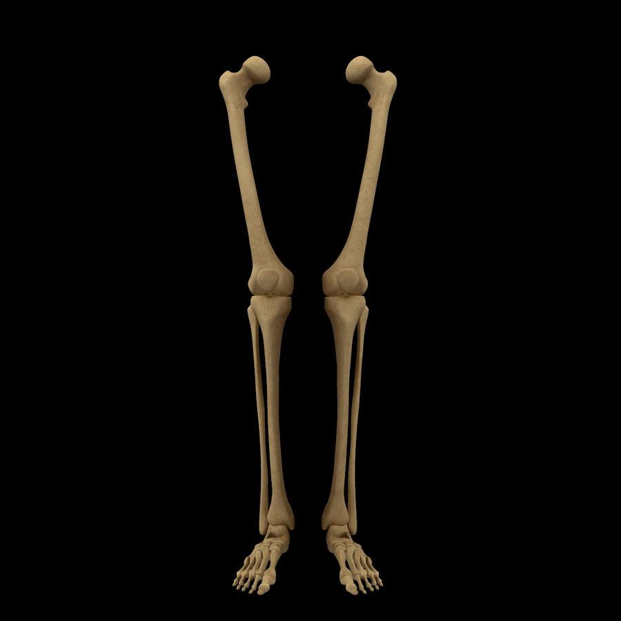 Anatomi Ben Fotben royalty-free 3d model - Preview no. 1