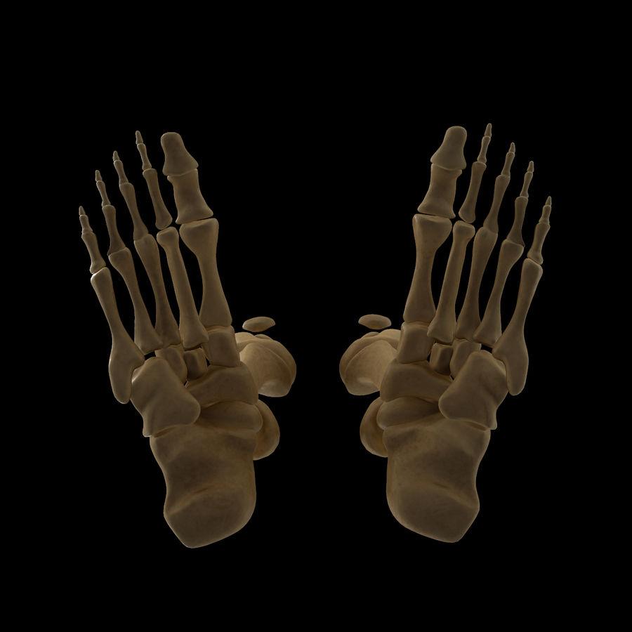 Anatomi Ben Fotben royalty-free 3d model - Preview no. 10